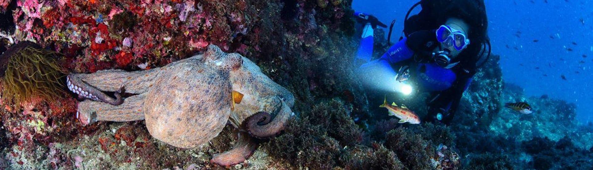 naui-passport-diver-course-on-pag-for-beginners-foka-diving-centar-simuni-hero