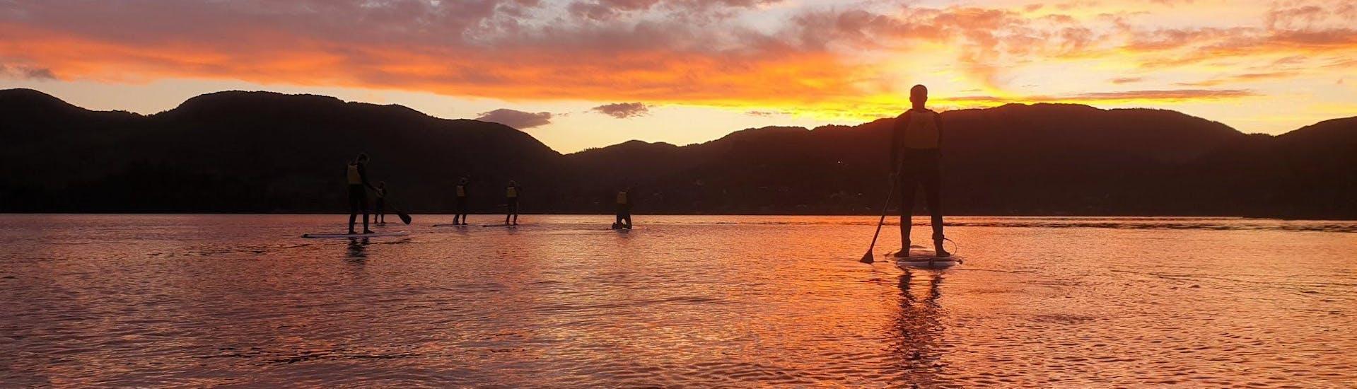 Paddle Board Rotorua - Glow Worm Tour Summer incl. Transfer