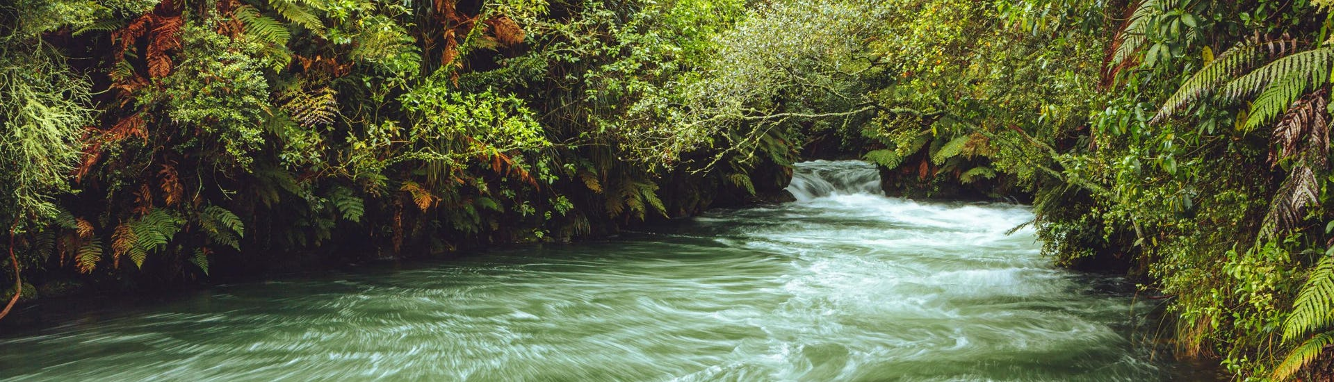 An image of the rousing Kaituna River in the region of Rotorua, a popular hotspot for white water rafting.