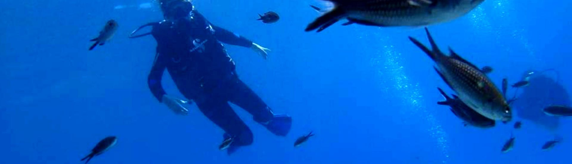 A woman exploring the fascinating underwater life of the Cretan Sea on her Scuba Diving Course for Beginners - PADI Scuba Diver together with an experienced instructor from Evelin Dive Center.
