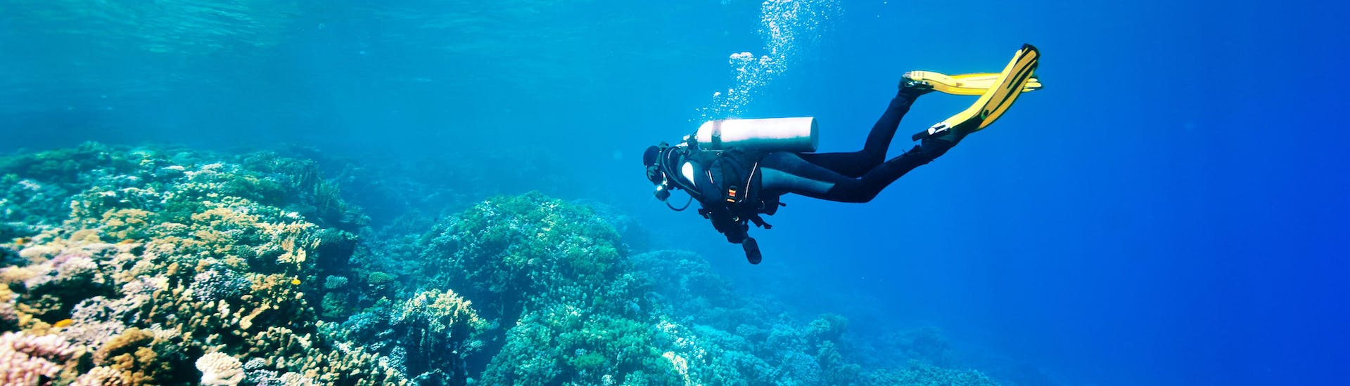 A scuba diver is exploring a reef while scuba diving in the scuba diving destination of Fuerteventura.