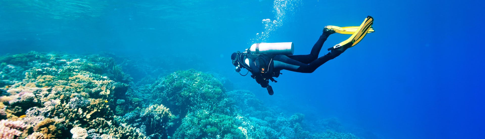 A scuba diver is exploring a reef while scuba diving in the scuba diving destination of Tenerife.