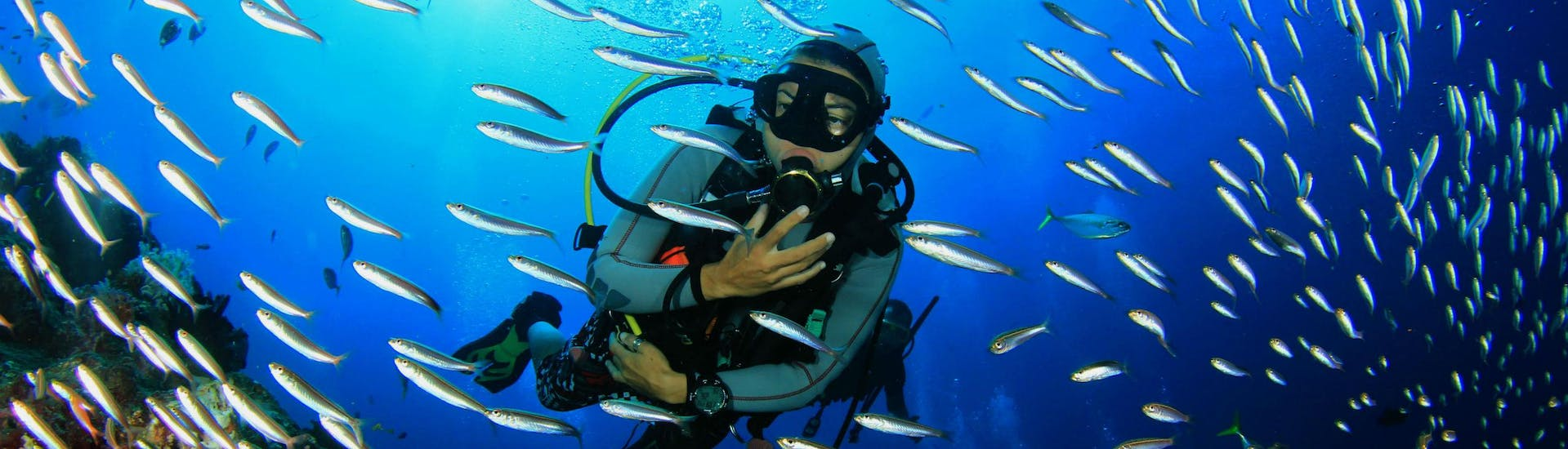 A female scuba diver is observing a shoal of fish while scuba diving in Cairns.