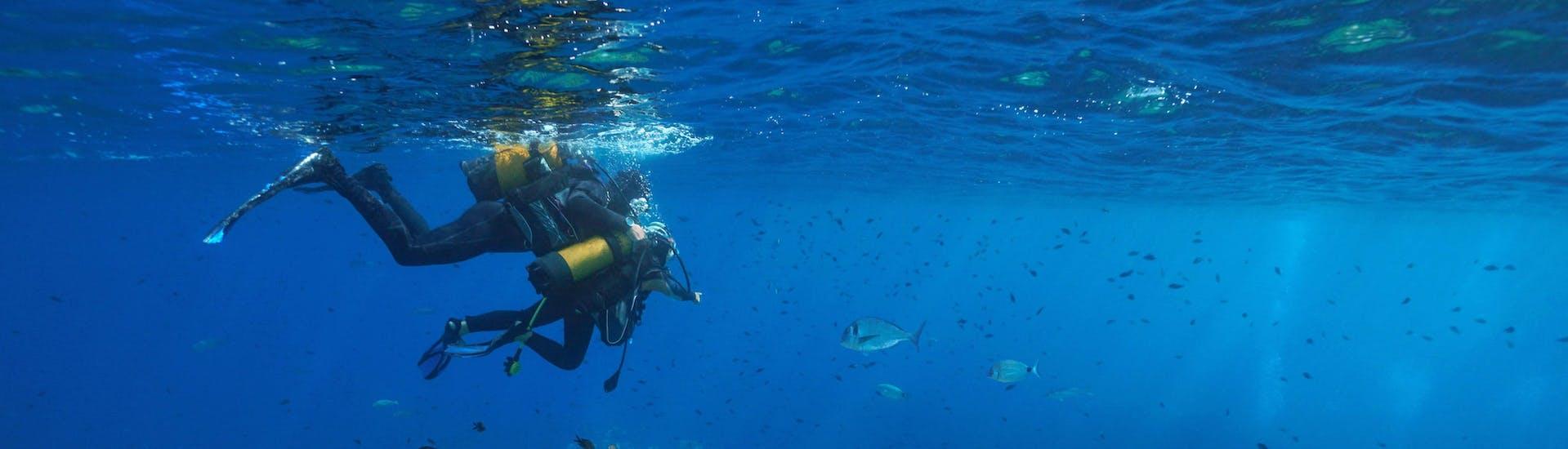 Deux personnes sont en train d'effectuer une excursion de plongée à Cerbère.