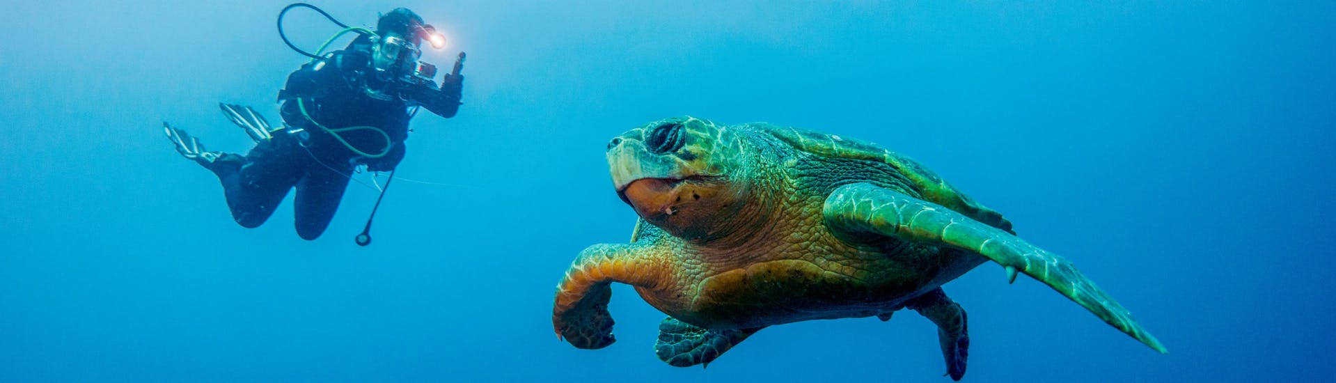 A scuba diver is taking a photograph of a turtle while scuba diving in KwaZulu-Natal.