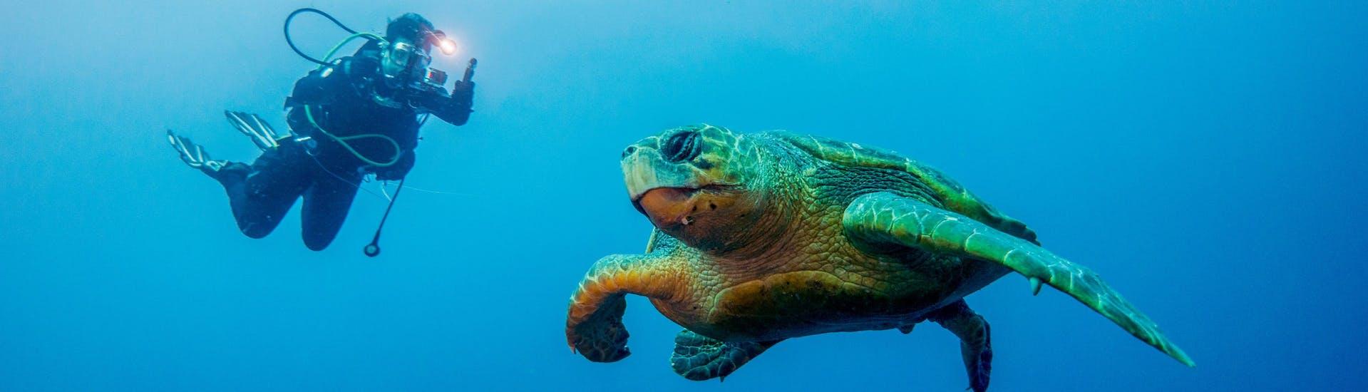 A scuba diver is taking a photograph of a turtle while scuba diving near Umkomaas.