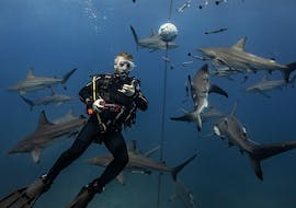 A scuba diver is signalling 'thumbs up' to the camera while surronded by a group of sharks during the activity Shark Diving in Umkomaas for Certified Divers with Blue Ocean Dive Resort.
