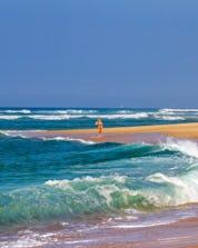 Surfing Seignosse (c) Shutterstock
