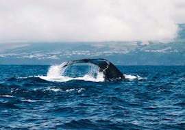"""Boat Tour from Vila Franca do Campo - """"Whale Watching"""""""