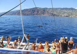 Catamaran Tour with Dolphin and Whale Watching from Funchal