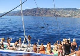 Sortie en bateau de Funchal avec Baignade & Observation de la faune