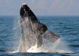 Balade en bateau Le Cap - Gansbaai avec Observation de la faune avec Shark Zone Cape Town