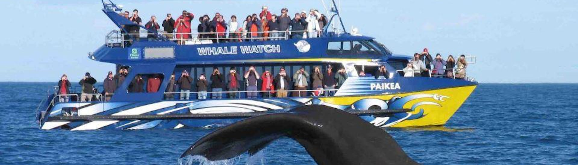 Whale Watching from Cape Town