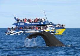 Paseo en barco de Gansbaai con avistamiento de fauna