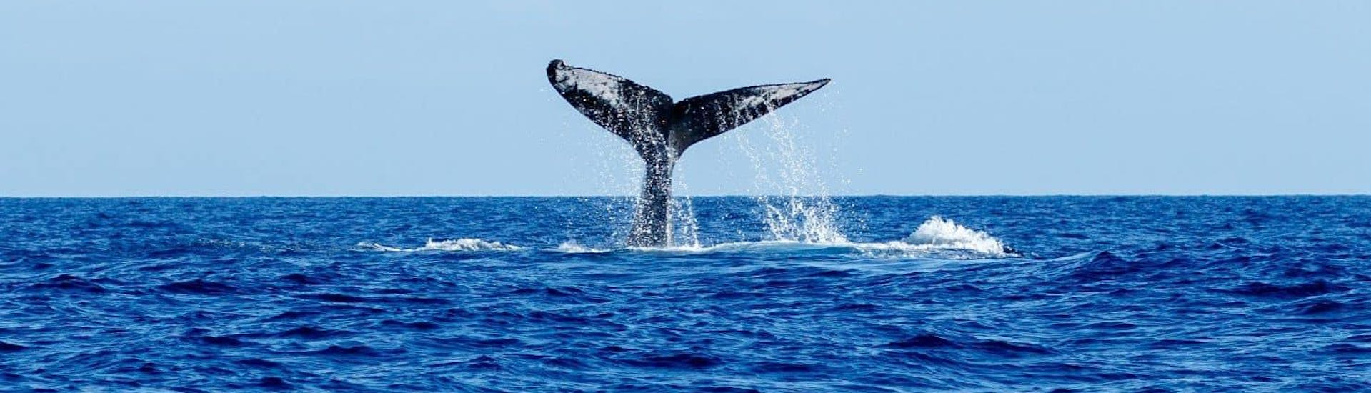 Whale Watching Tour from Caniçal