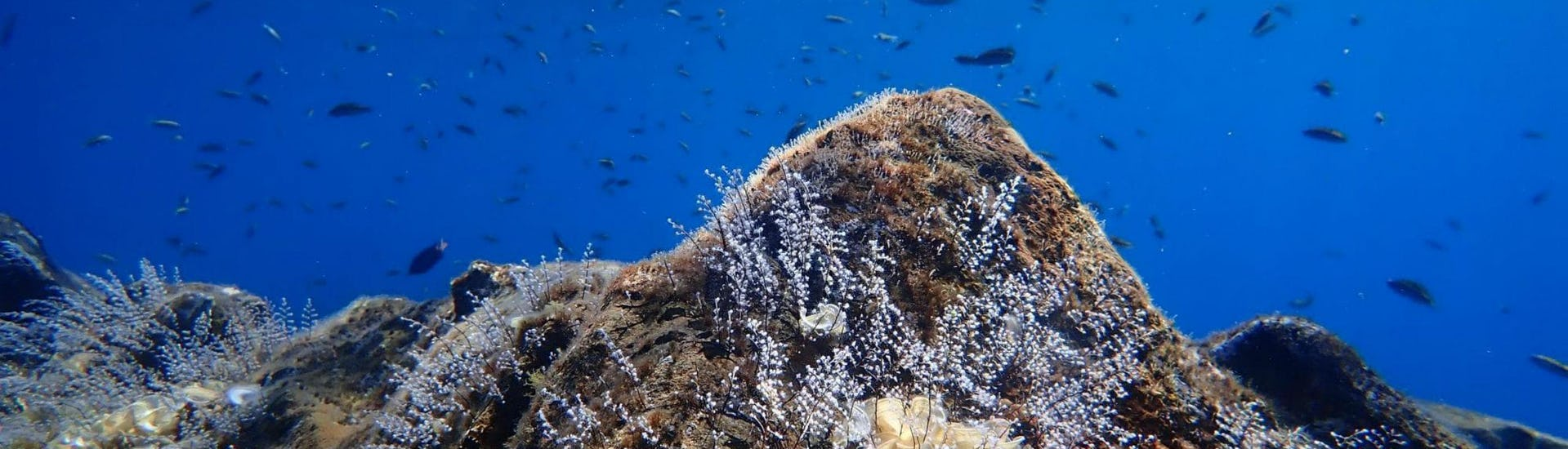 Discover Scuba Diving for Beginners - Tenerife