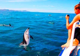 """A women taking a picture of a dolphin on the Boat Tour """"Dolphin Watching & Sunset"""" in the National Park Brijuni with the team of Korkyra Tour"""