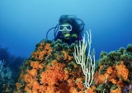 Trial Scuba Diving in Kvarner Bay with Dive Center Krk