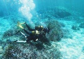 Friends are doing a 40min Trial Scuba Diving at Îles Cerbicale in Porto-Vecchio with Kalliste Plongée.