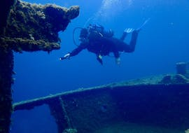 A person is diving during his Scuba Diving in Îles Cerbicale for Certified Divers with Le Kalliste Plongée.