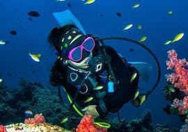 Guided Boat Dives on Makarska Riviera for Certified Divers with Butterfly Diving & Sailing Makarska