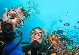 Two divers from the Sub Sea Son diving school explore the underwater world in Mali Lošinj.