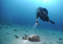 A diver from the diving school Sub Sea Son during a dive in the sea in Mali Lošinnj in Croatia.