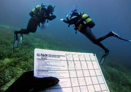 PADI Open Water Diver Course in Santa Ponsa for Beginners with ZOEA Mallorca