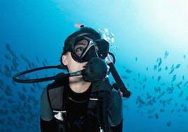 Scuba Diving - Guided Dives from Kamari with Navy's Waterworld Dive Center Kamari