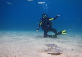 Trial Scuba Diving Course for Beginners - Discover Scuba with Native Diving Lanzarote
