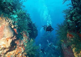 """Trial Scuba Diving """"1st Bubbles"""" for Beginners - Port Louis with Antidote Plongée Guadeloupe"""
