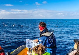 Azores Marine Birdwatching Expedition with Azores Whale Watching TERRA AZUL