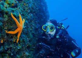 Guided Dives in Hvar & Pakleni Islands for Certified Divers avec Aqualis Dive Center Hvar