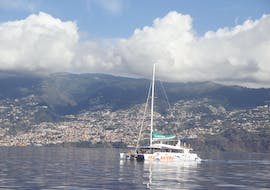 Catamaran Tour with Dolphin and Whale Watching from Funchal with VMT Madeira