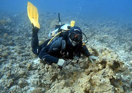 Guided Boat Dives in Lanzarote for Certified Divers with Pura Vida Diving Lanzarote