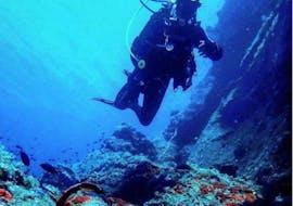 Scuba Duikcursus (PADI) in Golden Beach voor gecertificeerde duikers met Paros Divers