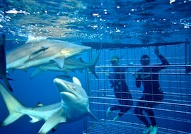 Whale Watching & Shark Diving from Cape Town  with Shark Zone Cape Town