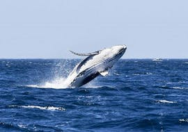 Whale Watching in Sydney from Circular Quay with Ocean Extreme Sydney