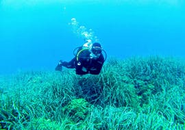 A man can be seen Trial Scuba Diving in Nice (20min) with the dive centre Chango Diving.