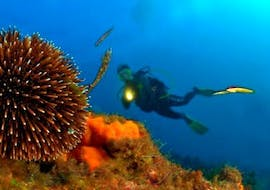 A diver is having fun underwater during the snorkeling in Saint-Tropez with European Diving School.