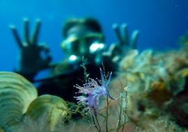 A diver is marveling at the underwater world during the Guided Dives around Portocolom for Certified Divers with East Coast Divers Mallorca.